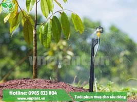 Hệ thống tưới cây sầu riêng