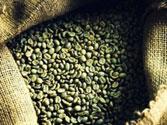 Cà phê hạt nhân Arabica S16