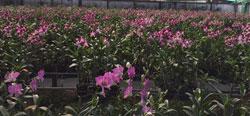 Vườn hoa lan