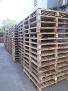 Pallet gỗ tràm