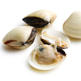 Frozen White Clams