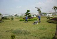 Dịch vụ chăm sóc cỏ và cây xanh