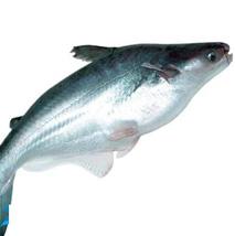 Cá Basa