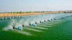Giám sát nuôi trồng Thủy sản