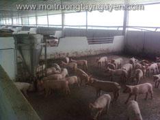 Trang trại chăn nuôi Vạn Hưng Phát