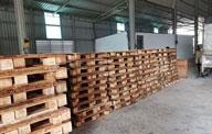 Đóng pallet gỗ thông